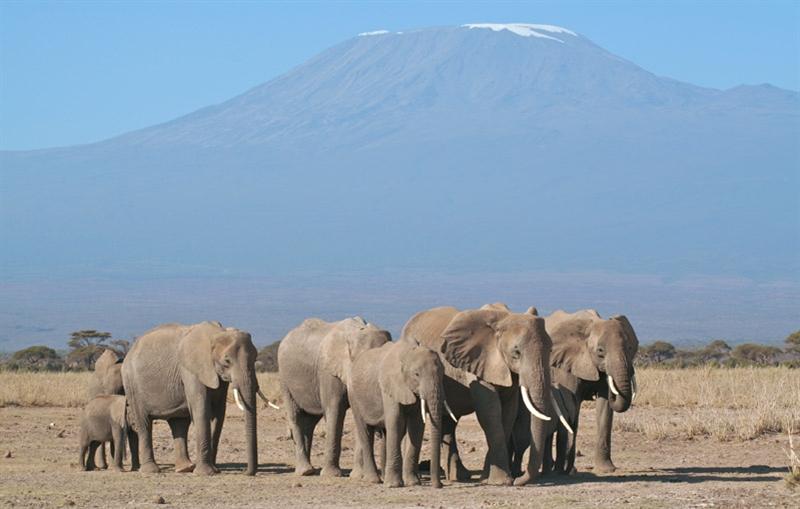 Internationale Kampeerreis - KENIA & TANZANIA verlenging Zanzibar -14 dagen; Wildlife rond de evenaar / internationale groep