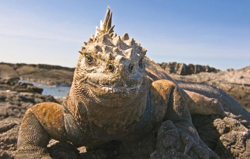 Koning Aap: Rondreis ECUADOR - 17 dagen; In het voetspoor van Darwin