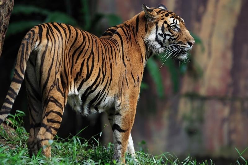 Rondreis INDIA: RAJASTHAN, GUJARAT EN MUMBAI - 23 dagen; Leeuwen, tijgers en tradities