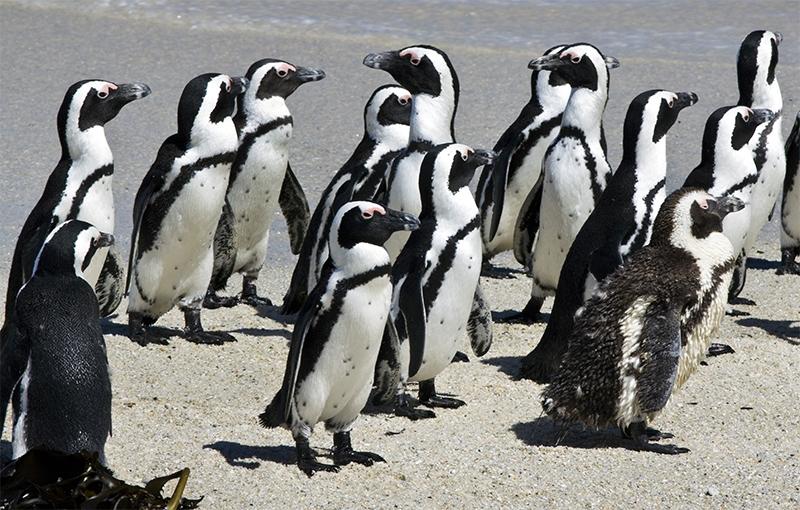 Koning Aap: Familiereis ZUID-AFRIKA - 14 dagen; Staan op een struisvogelei