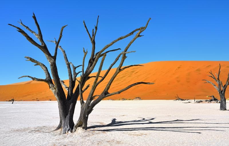 Koning Aap: Rondreis NAMIBIË - Internationale Kampeerreis - 21 dagen; Dwars door woestijn en zoutvlaktes