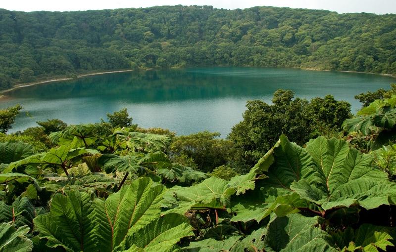 Koning Aap: Rondreis COSTA RICA - 15 dagen; Palmstrand, vulkanen en boomkikkers