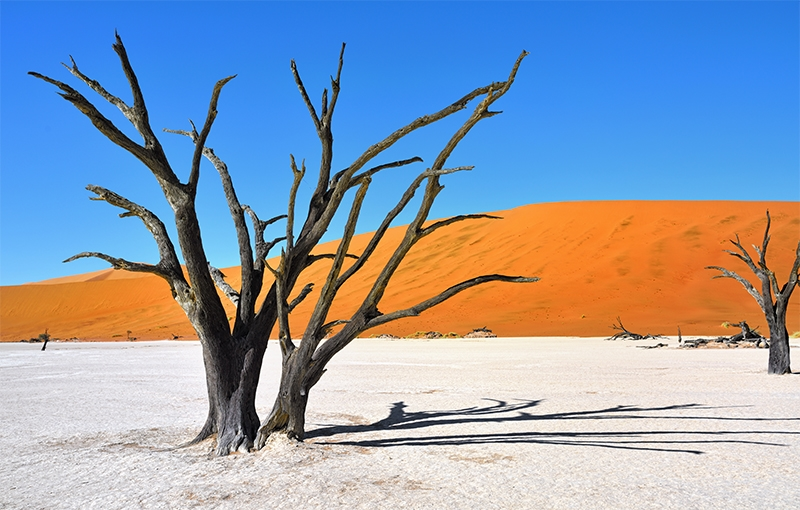 Familiereis ZUIDELIJK AFRIKA - 23 dagen; Baobabs en kokerbomen