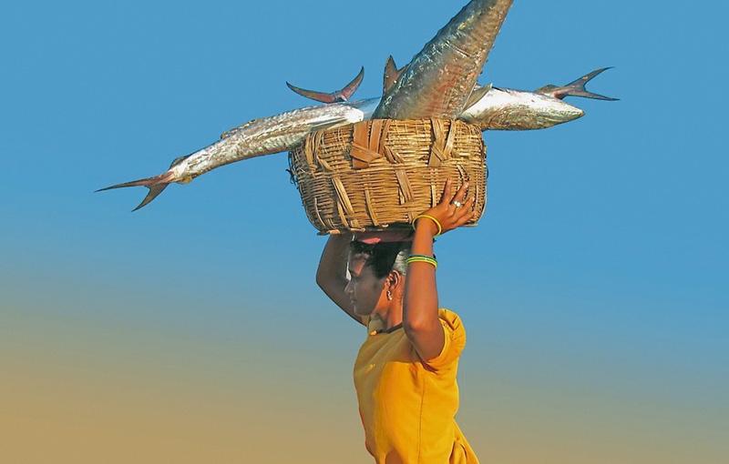 Koning Aap: Rondreis INDIA: SIKKIM EN ORISSA - 28 dagen; Het onbekende Oost-India