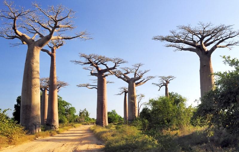 Rondreis MADAGASCAR - 30 dagen; Ringstaartmaki's en baobabs