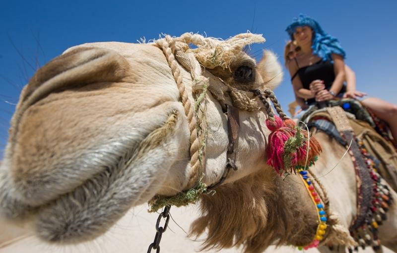 Koning Aap: Familiereis EGYPTE KORT - 9 dagen; Speurtocht naar de Oudheid