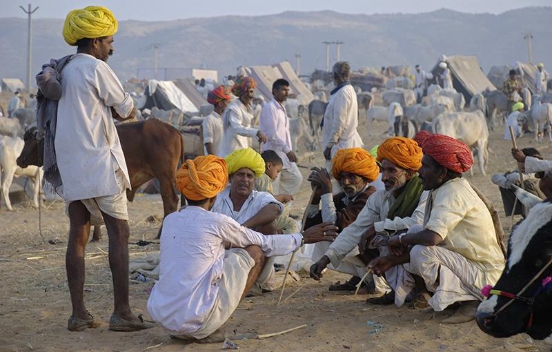 Koning Aap: Rondreis INDIA PUSHKAR FAIR - 22 dagen; Grootste kamelenmarkt van India