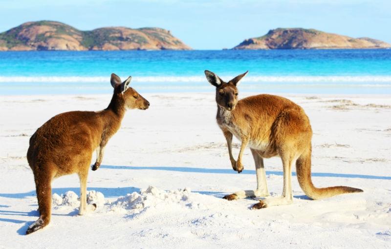 Koning Aap: Rondreis WEST-AUSTRALIË - 24 dagen; Van Adelaide naar Broome