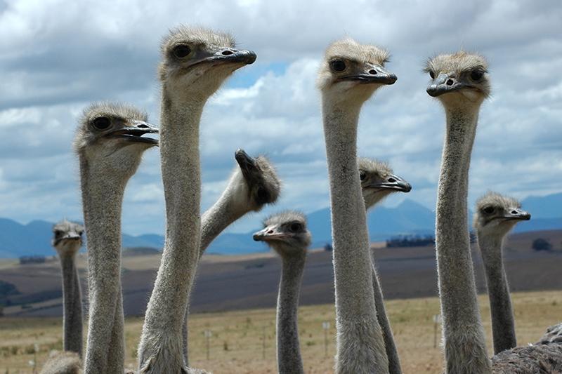 Sfeerimpressie Familiereis ZUID-AFRIKA KAAPSTAD - KRUGER N.P. - 15 dagen; Van pinguïns tot de Big Five