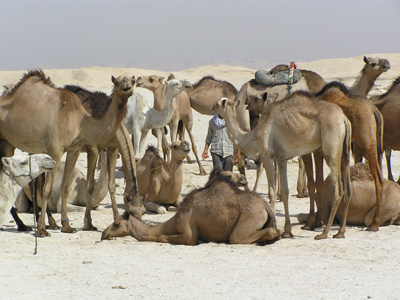 Shoestring: Groepsreis Egypte Strand en Cultuur ; Mummies, piramides en Rode Zee