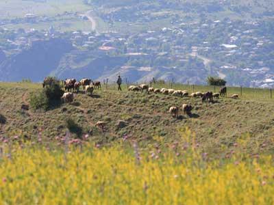 Shoestring: Groepsreis Georgië & Armenië; Waar de reiziger een gast is...