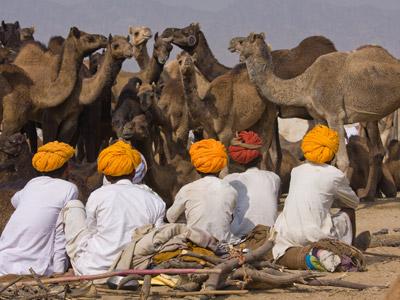 Shoestring: Groepsreis India Rajasthan ; Het land van de Maharadja's