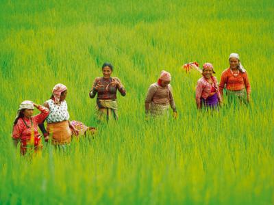 Shoestring: Groepsreis Nepal Avontuurlijk; Rondreis met Himalaya trektocht