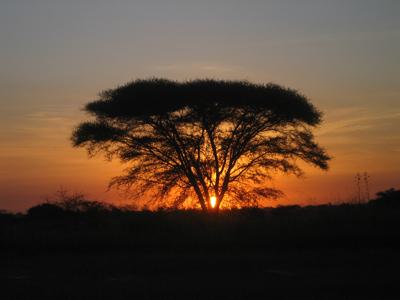 Groepsreis Kenia & Tanzania; Op safari rond de evenaar