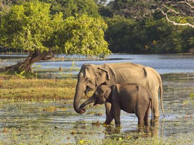 Shoestring: Groepsreis Sri Lanka; Tocht over een paradijselijk eiland