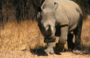 Shoestring: Groepsreis Zuid-Afrika, Swaziland & Lesotho ; Braai en seekoeien