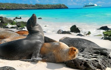 Follow Darwin at the Galapagos Islands