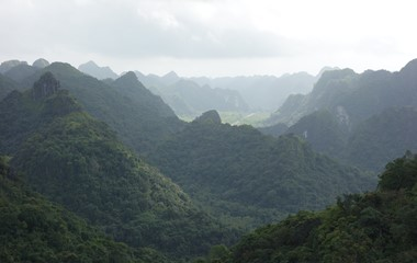 Forest and Hills of Vietnam