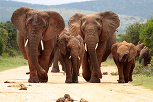 Bucketlist Krugerpark Zuid-Afrika